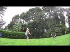 Dog plays volleyball